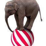 An elephant balancing on a ball