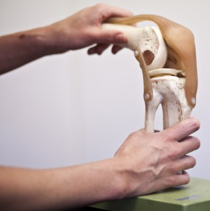 A model of a knee