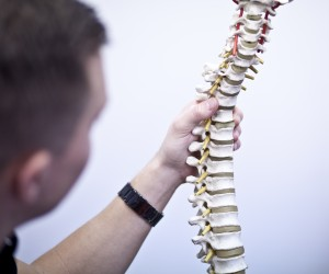 A model of a spine