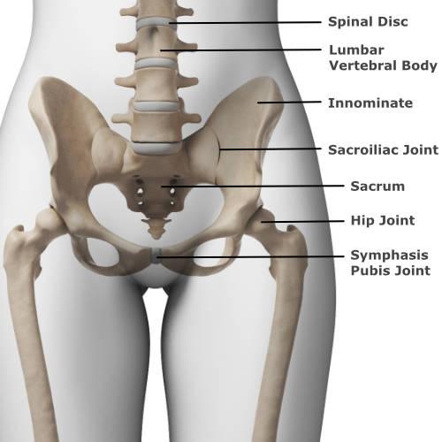skeletal anatomy of the pelvis
