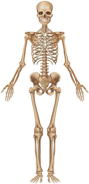 Osteoporosis Skeleton